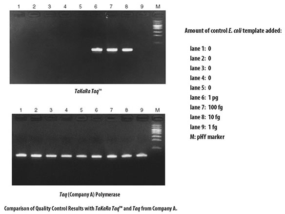 Quality control results for TaKaRa Taq DNA Polymerase and a Taq enzyme from Company A. Because Taq DNA polymerase is typically expressed in E. coli, it is especially important to test the polymerase for the presence of contaminating E. coli genomic DNA. Quality control testing of TaKaRa Taq polymerase for contamination was performed by nested PCR of the E. coli genomic DNA Ori region. The results demonstrate that TaKaRa Taq enzyme is a low DNA contamination grade enzyme.